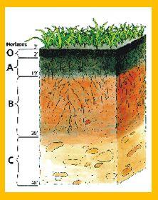 222px for Soil horizons for kids